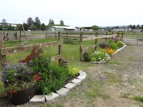 our garden at the Red Barn