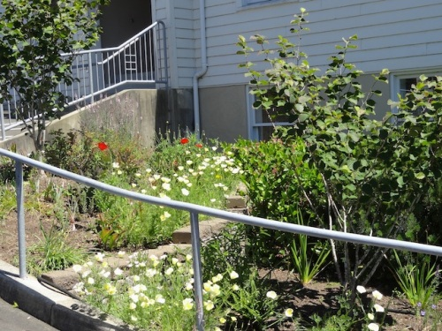 tiered garden at the Ilwaco Community Building