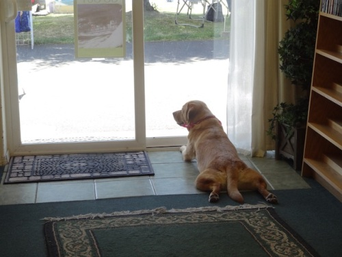 After her pals left, Scout kept watch over the market.
