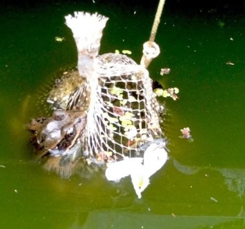 a frog hanging out on an old barley bag in the water boxes