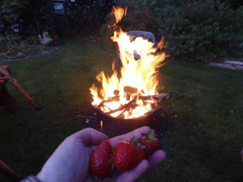 strawberries from the garden and a momentarily vigorous campfire