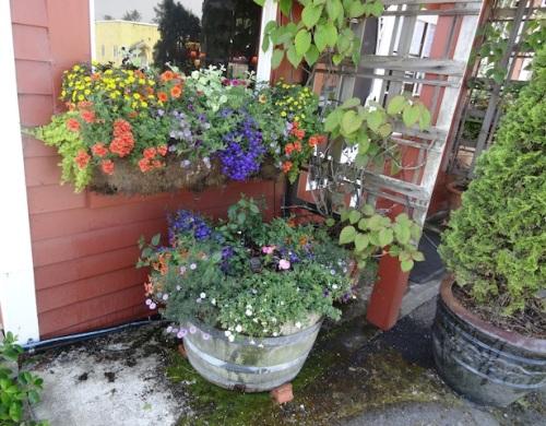 plantings by Nancy of Basket Case Greenhouse