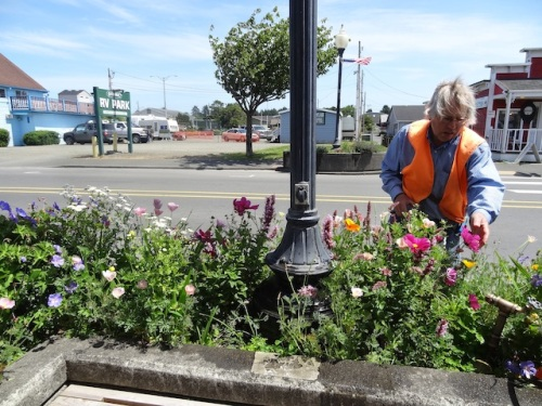Allan watering and deadheading