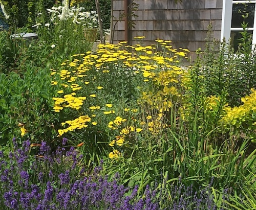 (Note to self: I have yellow achillea at home; should have it at the port, too!)