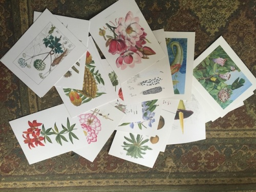 with a large selection of botanical prints. I need a bigger house with more empty walls!