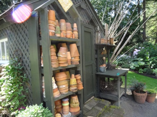 shaded side of potting shed