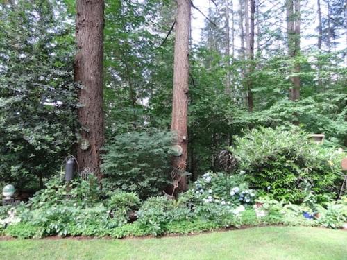 woodsy border