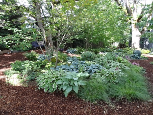 Most shade gardens on this tour had perfect hostas.