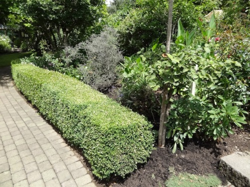 boxwood enhancing greenery