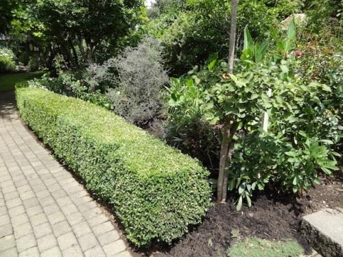 boxwood enhancing greenery