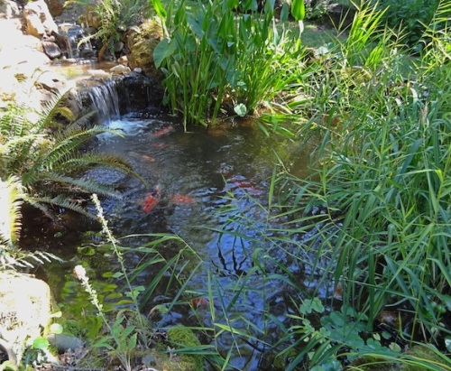 Again, I wonder how the koi in these various gardens are protected from herons and raccoons (and bears?)