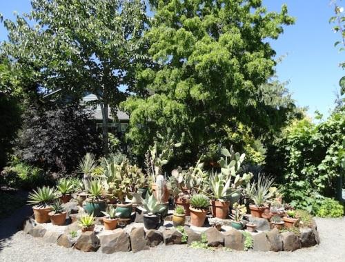 a cactus island