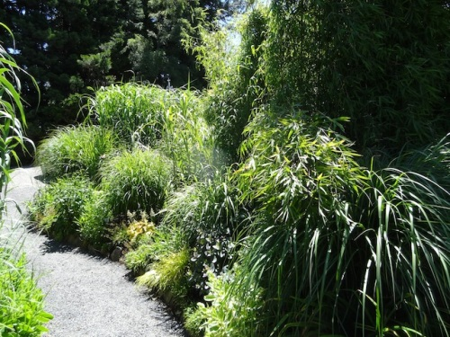 a front garden path