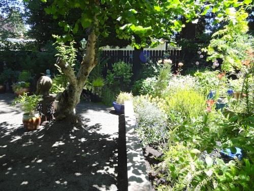 in the back garden.