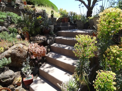 steps with cool plants; I went back to find another way up.