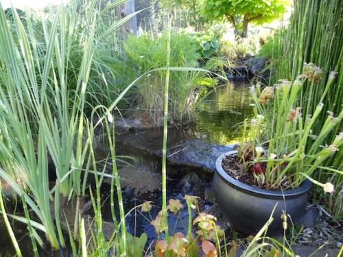I found a pond.