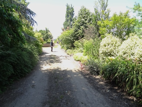 the access road to the garden