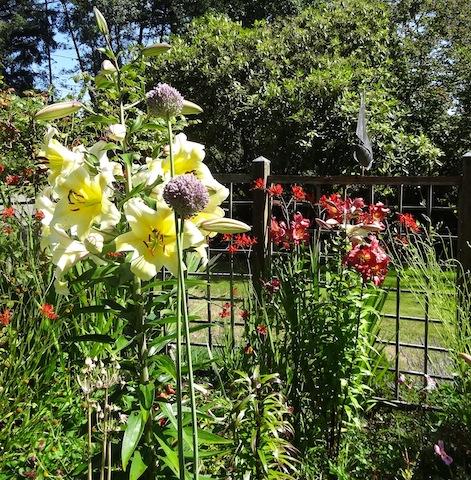 statuesque lilies