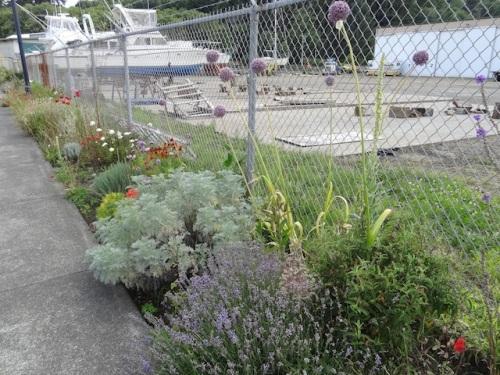 The silver plant is Artemisia 'Powis Castle'