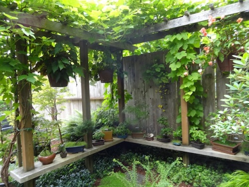 L Shaped arbor with benches, what a great idea.