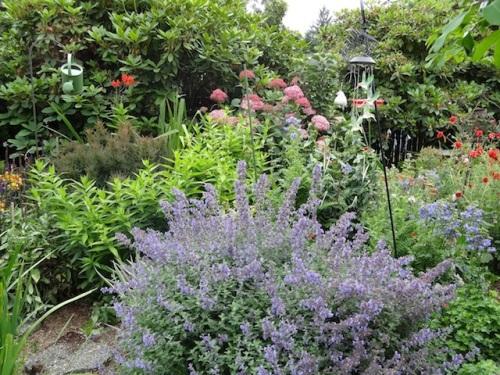 more garden admiration