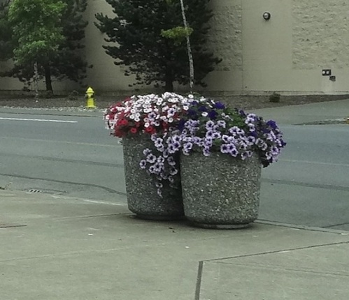good job, Aberdeen! I like the planters clustered together...great idea!