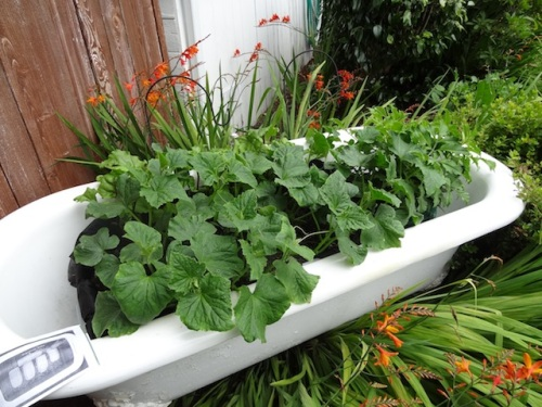 a planted bathtub