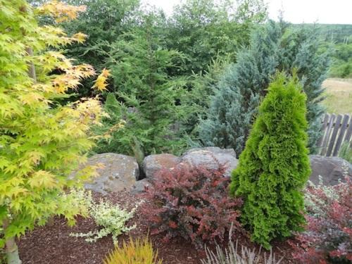 tree tops from the garden area below