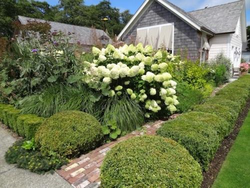 boxwoods and Hydrangea paniculata