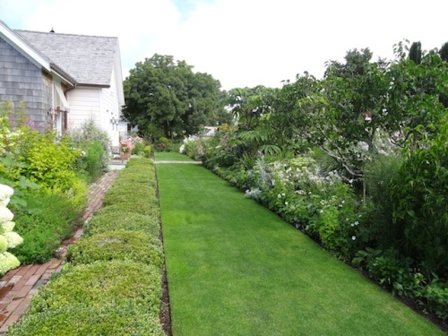 The front lawn and boxwood hedge
