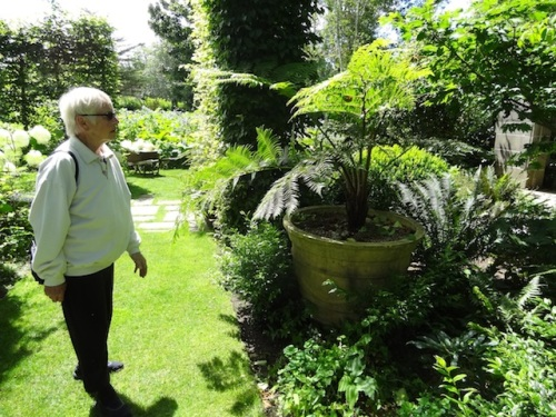 Patti loved the size of the tree ferns in pots.