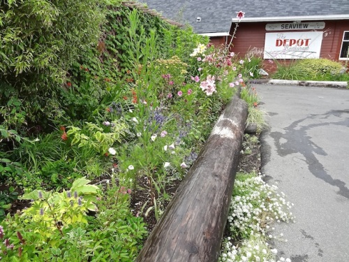 the weekly watering and deadheading at the Depot
