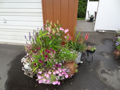 the back patio (one of three groups of planters)