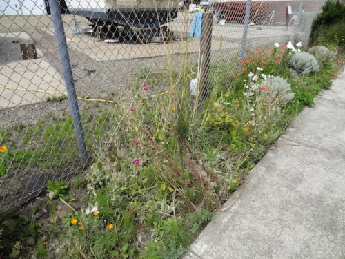 It was just shocking how much horsetail and grass weeds had returned.