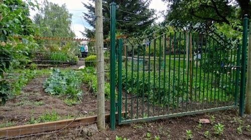 kitchen garden, lower level, Allan's photo