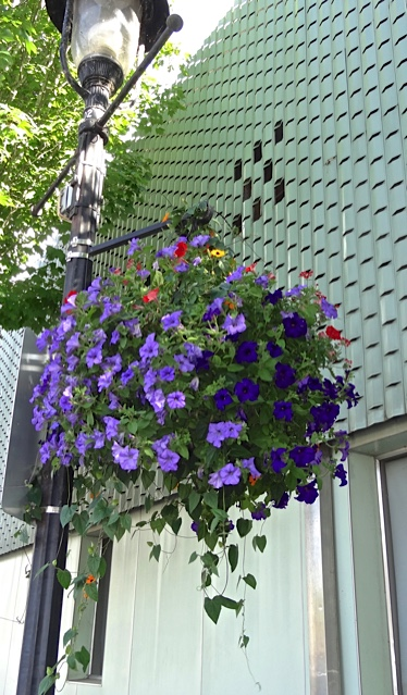 hanging basket along our walk (Allan's photo)
