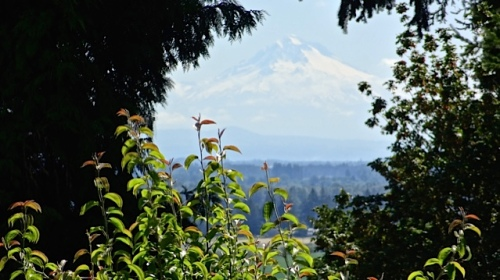 view of mount...Mount Hood??