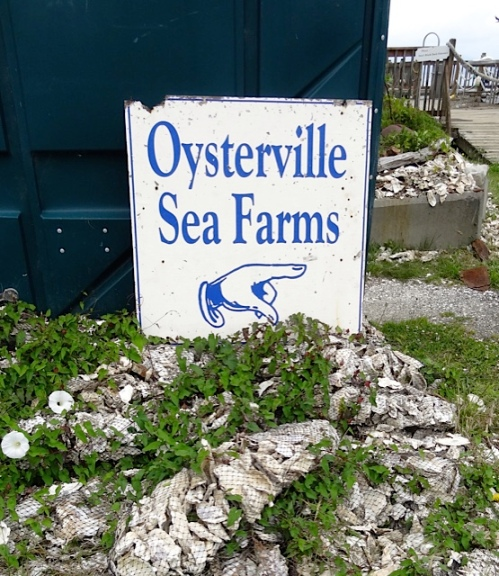 the land of oyster shells (Allan's photos)
