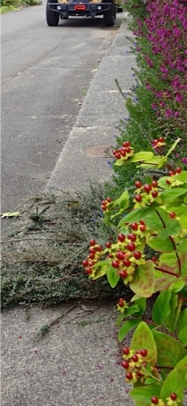 narrow street, narrow sidewalk (Allan's photo)