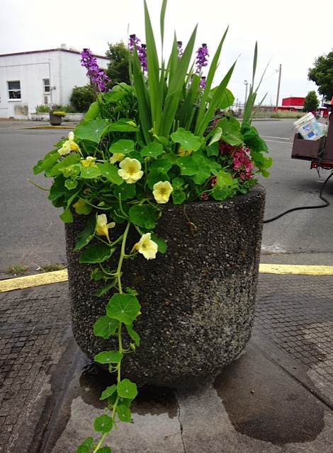 one of the Ilwaco planters (Allan's photo)