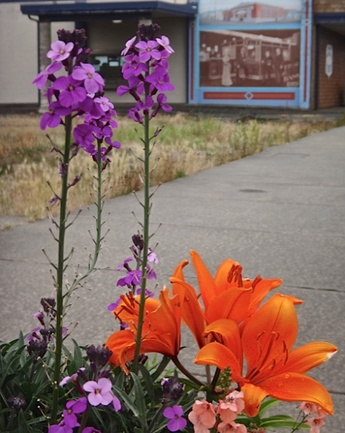 Ilwaco planter, with orange lilies somebody else stuck in (Allan's photos)