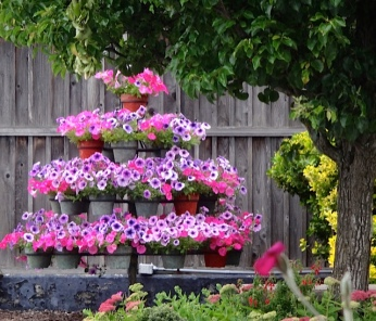 petunia array by the Long Beach Tavern (Allan's photo)