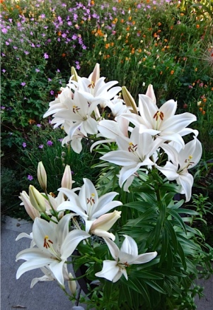 and lilies (Allan's photo)