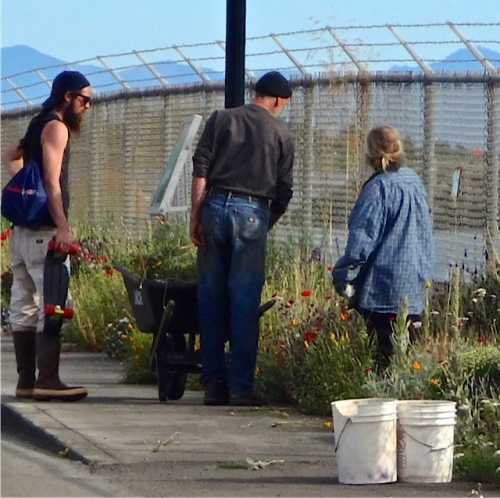 passersby admiring and asking questions about the garden.