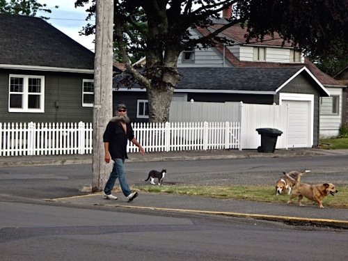 dog and cat walking across from the post office (Allan's photo)