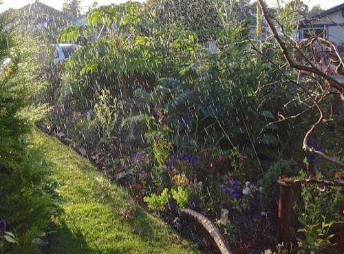 Watering the front garden