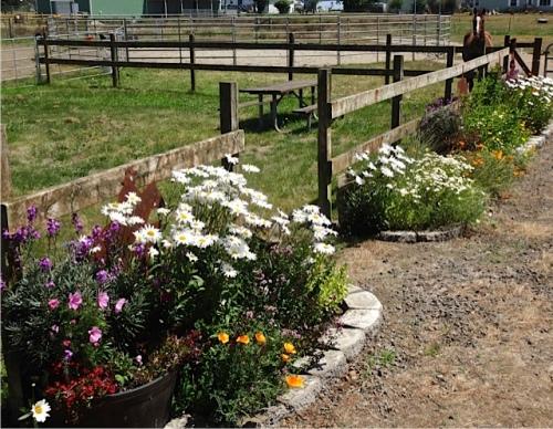 """Horses make a landscape more beautiful."" -Alice Walker (Allan's photo)"