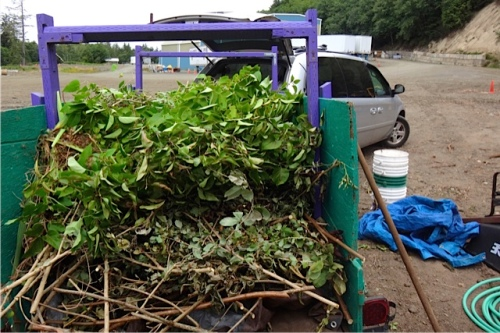 full load, mostly ours, all thorny: salmonberry, barberry, rose