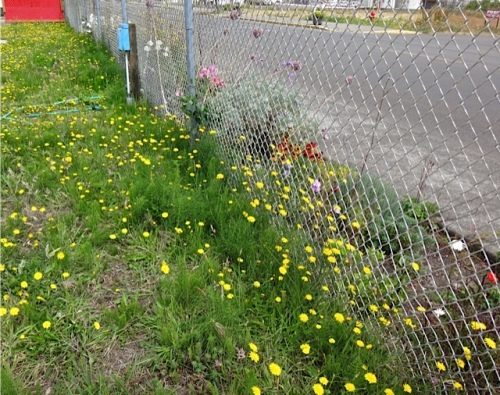 Allan's photo: We water from behind the fence. So weedy back there.