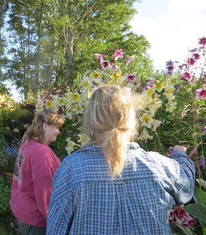 admiring dierama and lilies